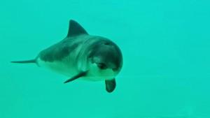 Berend, der Schweinswal. Mein Held des Tages