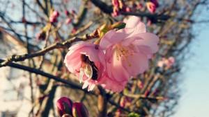 Glückstag und Frühlingsanfang