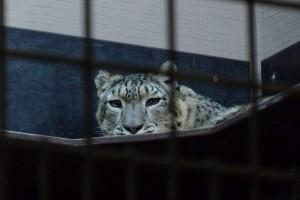Winterlicher Zoobesuch in der Wilhelma in Stuttgart
